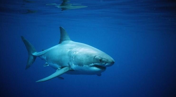 无人机新用途:巡逻海滩,揪出游弋的危险大白鲨