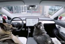 """特斯拉的新""""狗模式""""引起了动物福利倡导者的愤怒。-ope体育专业版那点事"""