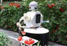 研究人员表示,机器人可以运营未来的农场-ope体育专业版那点事